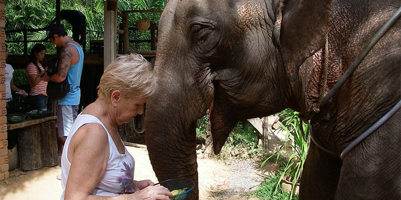 elephant-thailande